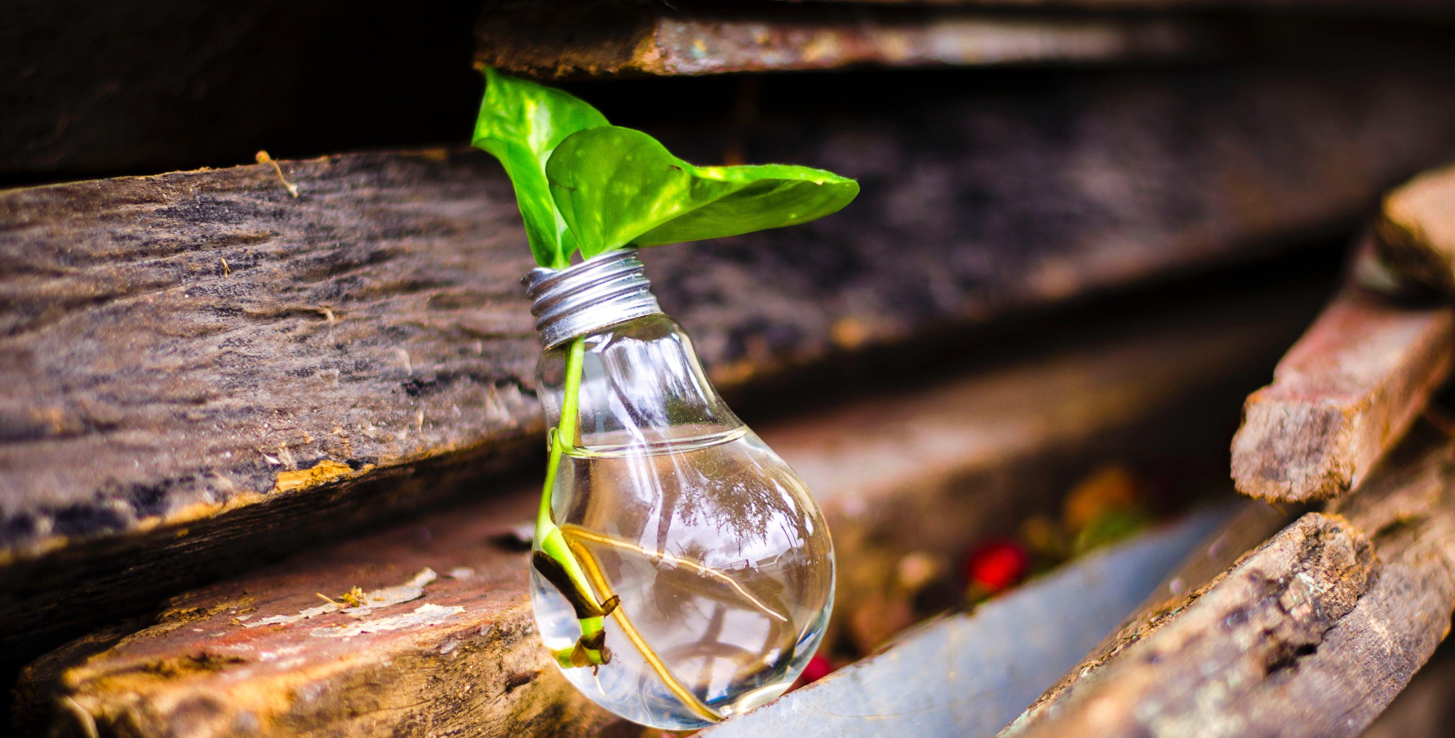 bulb-growth-idea-315658